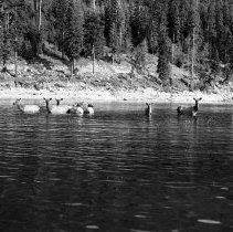 """Image of Wallowa Lake, Elk 4 - """"College Men's Club Weekend at Wallowa Lake - April 1940"""""""