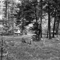 """Image of Wallowa Lake, Elk 5 - """"College Men's Club Weekend at Wallowa Lake - April 1940"""""""
