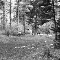 """Image of Wallowa Lake, Elk 6 - """"College Men's Club Weekend at Wallowa Lake - April 1940"""""""