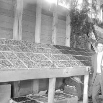 """Image of Cove, Cherry Fair Display 3 - """"Fifth Annual Cherry Fair - 1915 - Cove, Oregon.  An unidentified man stands beside a cherry display."""""""