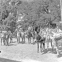 "Image of Cove, Pack Mules 1 - ""Ogden packtrain mules  - circa 1917 - Cove, Oregon."""