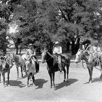 "Image of Cove, Pack Mules 2 - ""Ogden packtrain mules  - circa 1917 - Cove, Oregon."""