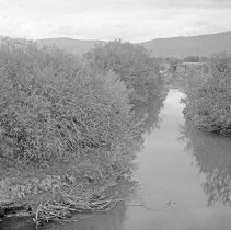 "Image of Cove, Stream 1 - ""Cove, Oregon area - circa 1912.  A stream or irrigation canal lined on both sides with trees and brush."""