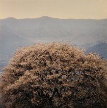 Image of 1992.60.17 - Nagano, Ryoichi