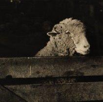 Image of 1992.57.8 - Cordingley, Tom