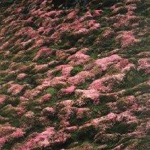 Image of 1992.60.29 - Nagano, Ryoichi