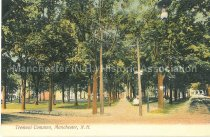 Image of Postcard, Tremont Common, Manchester, N.H. - 1967.025.018