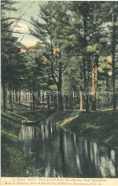"""Image of Postcard """"A Shady Nook"""", Pine Island Park, Manchester, New Hampshire - 1970.086.035"""
