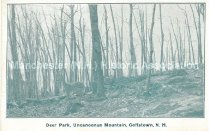 Image of Postcard, Deer Park, Uncanoonuc Mountain, Goffstown, N.H. - 2012.514.065