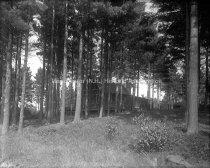 Image of Pine Crest W. C. Heath's Camp - 78-015-034