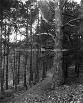 Image of Road Through Woods Uncanoonuc Mt. - MHAGN 033