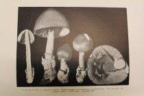 Image of sample b & w photo