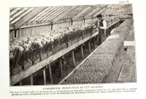 Image of Commercial grower photo
