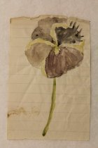 Image of Augustine's pansy watercolor