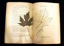 Image of Botanical specimen in book