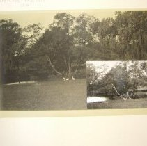 Image of Pond at Tudor Hall with White Geese Smaller Print