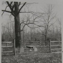 Image of 2780 - APG Old Baltimore - Phillips Cemetery and tree.