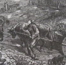 Image of 3307 - Rolling Tobacco to Market