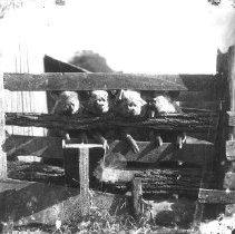 Image of 2384 - Print, Photographic