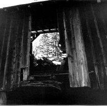 Image of 977-2sm - Black & white photo of Liriodendron Barn