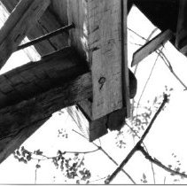 Image of 986-1sm - Black & white photo of Liriodendron Barn