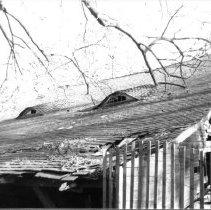 Image of 981sm - Black & white photo of Liriodendron Barn