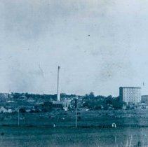 Image of Queen Bee and Electric Plant, n.d.