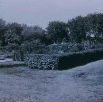 Image of McKennan Park hedge, ca. 1915-1917
