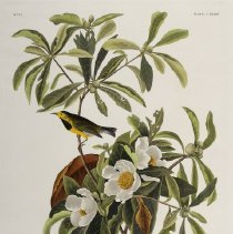 Image of Audubon, John James - American