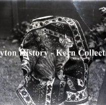 Image of K.1.7.075 - Glass - Plate Negative - Wuicher's Cat - Dayton, OH - 1895