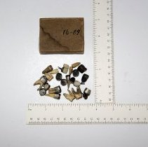 Image of 1945.2.3 - Crowns & Extracted Teeth