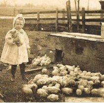 Image of Young girl holding teddy bear and small bucket standing with baby chicks  -