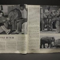 Image of Saturday Evening Post Article Little Butch