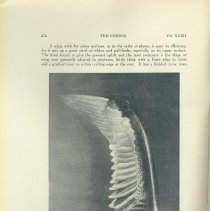 Image of Bunnell's Aeronautics of Birds of Flight, 2