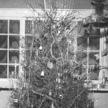 Image of Christmas Tree with Toy Passenger Train Set - 1930s photo negative of a Christmas tree with toy train under it.  Electric outline O gauge locomotive with 3 passenger cars are unidentified.