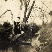 """Image of P29252 - A black and white photo of a woman sitting in a branch of a tree by a creek. She has a long, black skirt, and a long sleeved, high necked, ruffled shirt. she is holding a hat, and a coat is hanging in the tree in front of her. The back of the picture has pencil writing that says; """"Min"""" and """"8 x 10 mounted"""". It looks like it could be Minnie Evelyn Hartvig, married to Will Brown."""