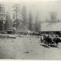 Image of TP1024 - Landscape - Oxen, horses and men that have hauled logs to the Empire Mill. Mill building is on the right.
