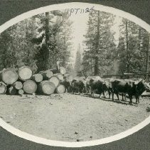 Image of TP1124 - Early Empire Mill. Oval picture set into a grey square frame. Ox team of at least 8 oxen pulling logs (right side of photo). 2 men; one with a prod / whip standing behind oxen; one standing atop a pile of logs. Logs range from a few feet to about 6 feet in diameter (left side of photo). Trees in background. Edge of a structure / building on right side of photo. Foreground is a clearing / road.