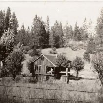 Image of TP395 - Old John Kinney Place -  1939. Cabin in meadow, surrounded by pines.