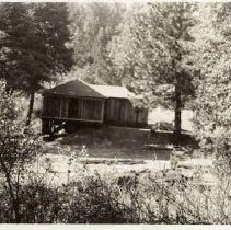 Image of TP396 - Old John Kinney Place  1939. Cabin surrounded by oaks and pines.