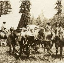 Image of TP2871 - A black and white photo of Fahey men on their horses with pack horses at Bell Meadows.