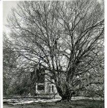 Image of P5825 - Print, Photographic