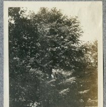 Image of P9171 - Print, Photographic