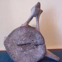 Image of C07.528.1-2 - Whale vertebrae