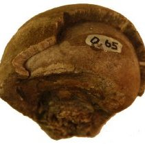 """Image of C12.520 - """"An Egg found Within Another"""" (bone)"""