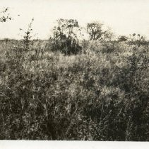 Image of P07_09_01 - Harriman Photograph Collection