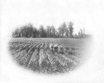 Image of GN7131 - Agriculture - Field Crops
