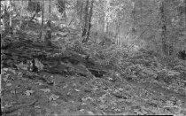 Image of KE1457 - Lumber - Activities
