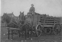 Image of GN10396 - Eugene - Transportation - Animal
