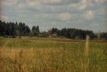 Image of GN10263 - Fern Ridge Region